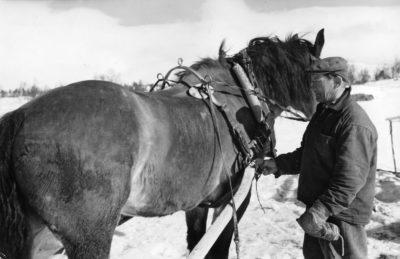 Nord  5: Per Andersson med sin häst