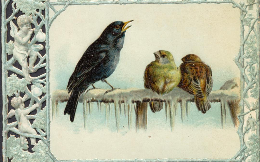 3 Fler små fåglar